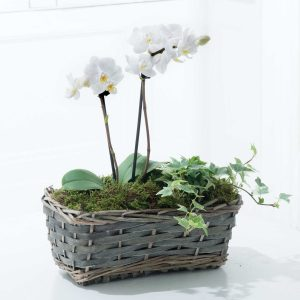 Orchid Gift Basket